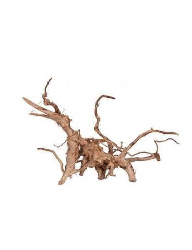 AQUAVIE - Vigne Rare rouge 30 - 42 cm