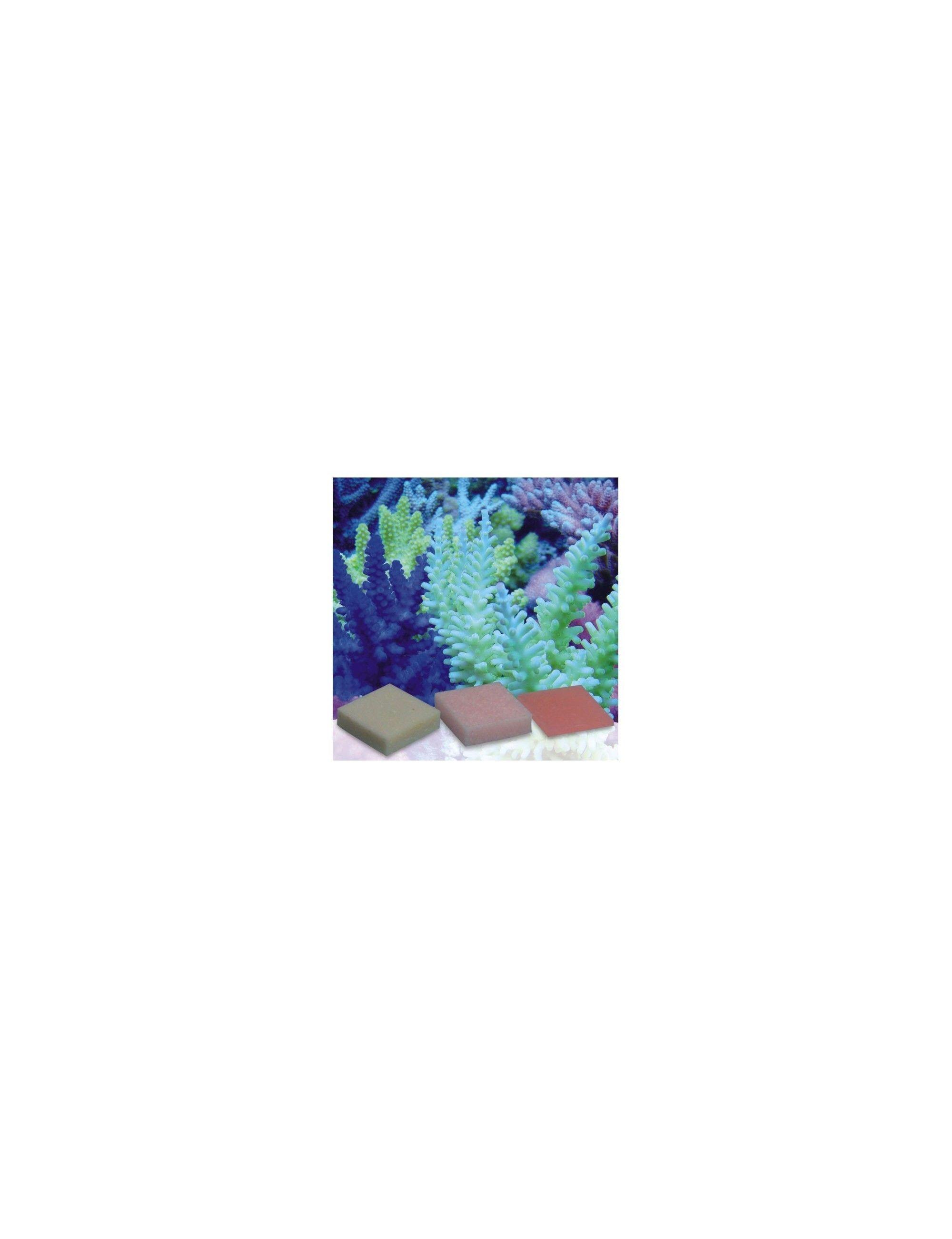 KORALLEN-ZUCHT distributeur de fer concentré  ( 10 tablettes )