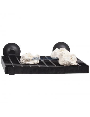 Grille support pour boutures de coraux avec ventouses.