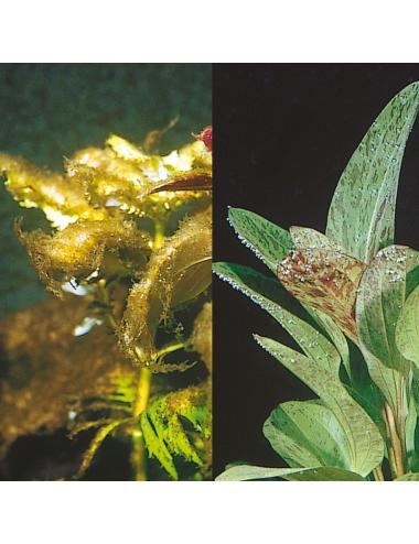 JBL - Algol - Contre les algues indésirables - 250ml