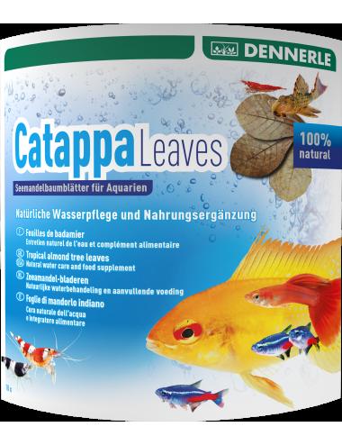 DENNERLE - Catappa Leaves - 10 Pces - Feuilles de badamier