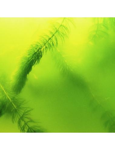 JBL - AlgoPond Green - 2.5l - Anti-algues verte