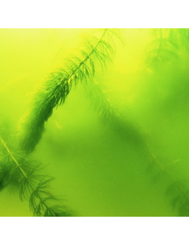 JBL - AlgoPond Green - 5l - Anti-algues verte