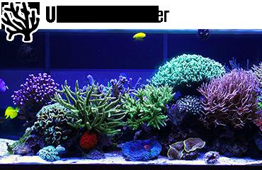Univers Eau de Mer - Des milliers de produits disponibles pour votre aquarium d'eau de mer.