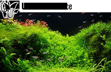 Univers Eau Douce - Des milliers de produits disponibles pour votre aquarium d'eau douce.