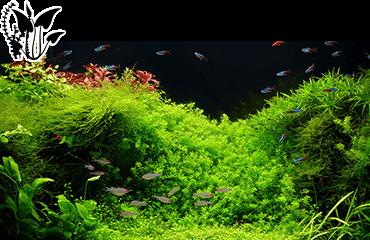 Matériel pour aquarium d'eau douce - Des milliers de produits disponibles pour votre aquarium d'eau douce.
