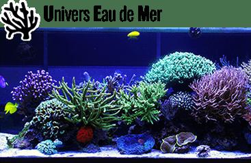 Matériel pour aquarium d'eau de mer - Des milliers de produits disponibles pour votre aquarium d'eau de mer.