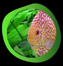 Traitement de l'eau et des poissons d'aquarium et bassin